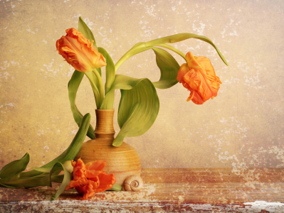 Picture no: 11448518 vintage tulips Created by: Rolf Eschbach