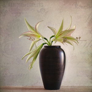 Picture no: 11451010 Amaryllis Vinatge Created by: Steffen Gierok