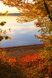 Picture no: 11465472 Herbstabend am Starnberger See Created by: SusaZoom