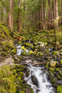 Picture no: 11472744 Olympic National Park Created by: TomKli