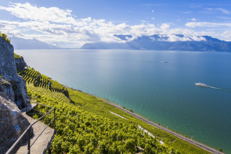 Picture no: 11473908 LAVAUX, GENFER SEE Created by: dieterich