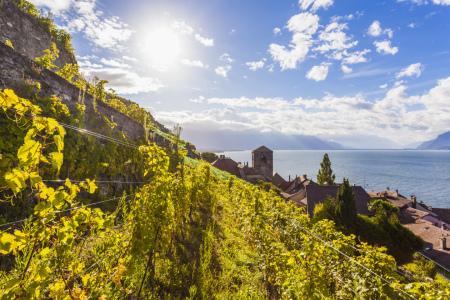 Picture no: 11478556 ST. SAPHORIN IM LAVAUX, GENFER SEE Created by: dieterich