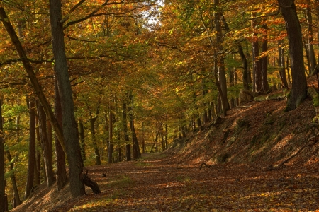 Picture no: 11480716 Durch den goldenen Herbstwald Created by: RonNi