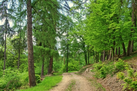 Picture no: 11481814 Wandern durch den Wald im Mai Created by: RonNi