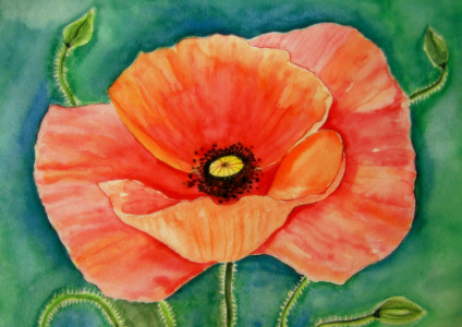 Picture no: 11495229 Mohn-Blüte Aquarell Malerei Created by: siegfried2838