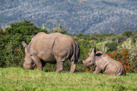 Picture no: 11496135 Rhino-Familie Created by: Thomas Herzog