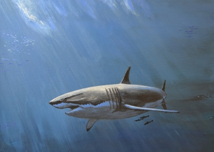 Picture no: 11503404 White Shark Created by: SchmidtArt