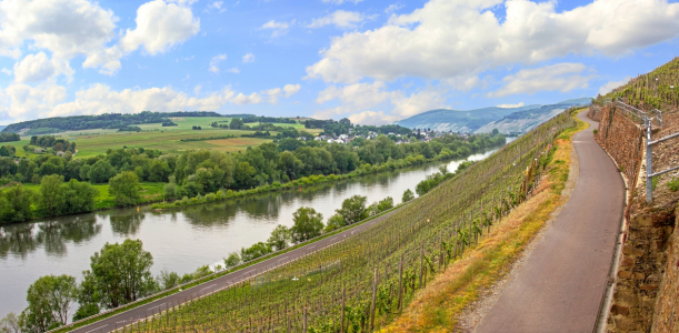 Picture no: 11503463 Weinberge an der Mosel I Created by: SusaZoom