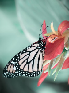 Picture no: 11505152 butterfly Created by: Richard-Young