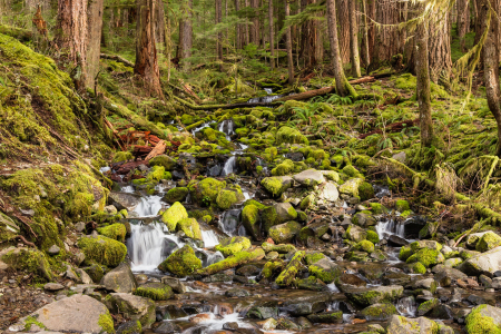 Picture no: 11523639 Olympic National Park Created by: TomKli