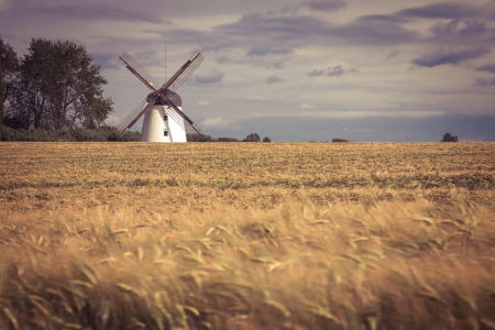 Picture no: 11527846 Windmühle Im Feld Created by: SooWhatPhotography