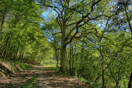 Picture no: 11531464 Sonniger Waldweg Created by: RonNi