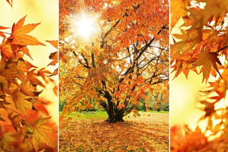 Picture no: 11540926 Goldener Herbst Created by: SusaZoom