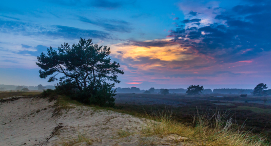 Picture no: 11544694 Hiddensee Wanderdünen Created by: Jens-Gottschalk