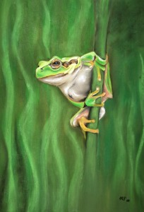 Picture no: 11560150 Laubfrosch Created by: MoNoir