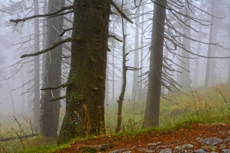 Picture no: 11561726 Wald3 Created by: KundenNr-295250