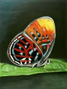 Picture no: 11564614 Mariposa Created by: MoNoir