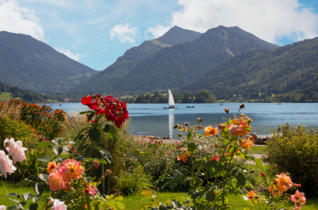 Picture no: 11567184 Schliersee-Sommer Created by: SusaZoom