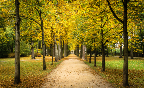 Picture no: 11595272 Bayreuth Hofgarten Herbst Created by: KundenNr-296098