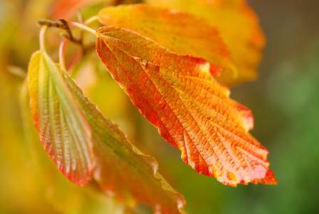 Picture no: 11599968 Herbstblätter Created by: Ostfriese