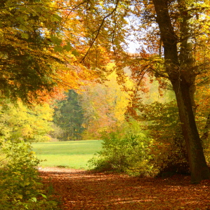 Picture no: 11605885 Herbstzeit Created by: GUGIGEI