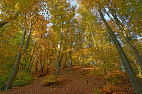 Picture no: 11607501 Herbstwald Created by: Rolf Eschbach