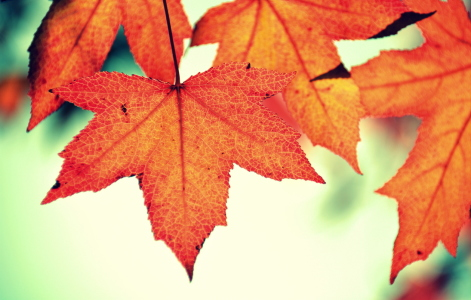Picture no: 11612445 Herbst-Poesie Created by: GUGIGEI