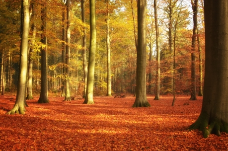 Picture no: 11614707 Sonniger Herbst Wald Created by: Susann Mielke