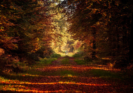 Picture no: 11616377 Herbstspaziergang Created by: Fineart-Prints-and-Photos