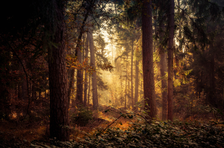 Picture no: 11616381 Mystischer Wald Created by: Fineart-Prints-and-Photos
