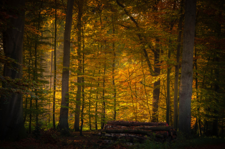 Picture no: 11616383 Goldener Herbst Created by: Fineart-Prints-and-Photos
