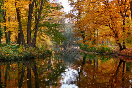 Picture no: 11616713 Herbst Created by: Atteloi