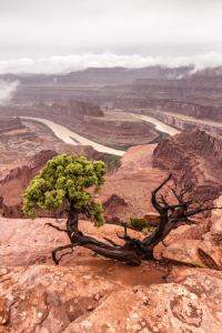 Picture no: 11617395 Dead Horse Point State Park Created by: TomKli
