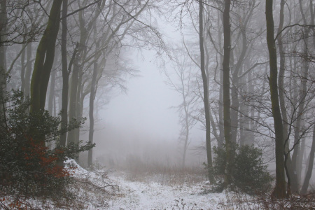 Picture no: 11640366 Winterwald mit Nebel Created by: falconer59
