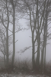 Picture no: 11640372 Winterwald mit Nebel 2 Created by: falconer59