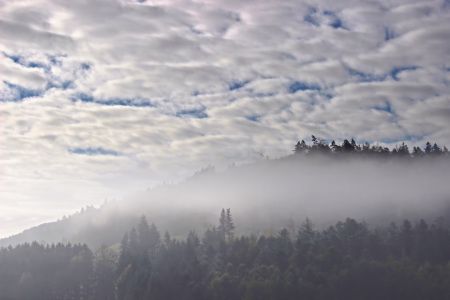 Picture no: 11651858 Wolken, Wald und Nebel Created by: falconer59
