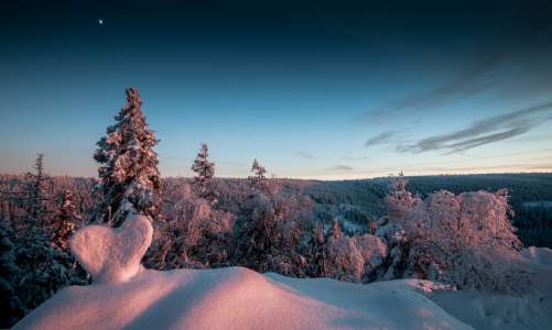 Picture no: 11676048 Winter Created by: Steffen Henze