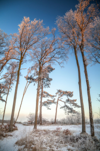 Picture no: 11679678 Winterzauberwald Created by: FotoDeHRO