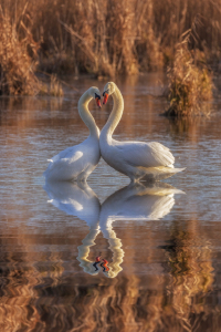 Picture no: 11680838 True love Created by: Thomas Herzog