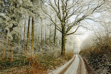 Picture no: 11681460 Winterlandschaft Created by: Ostfriese
