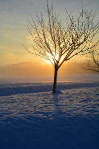 Picture no: 11688214 Sonnenaufgang im Winter Created by: Claudia Evans