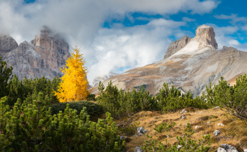 Picture no: 11694852 Lärche im Herbstkleid, Dolomiten Created by: orxy