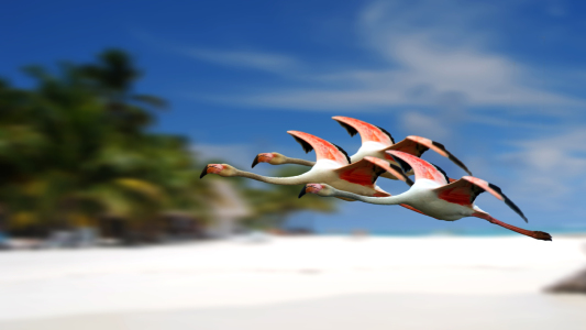 Picture no: 11705618 Flamingo Created by: pixelklaus
