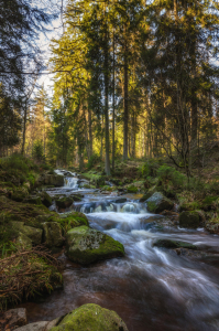 Picture no: 11726148 Wild Romantisch im Harz Created by: Steffen Gierok