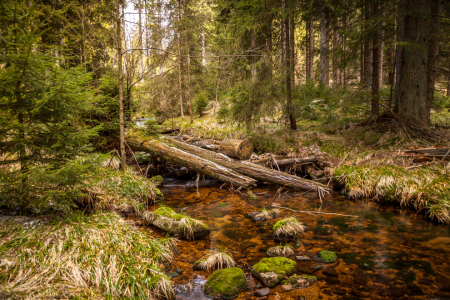 Picture no: 11747850 Im Harz Created by: FotoDeHRO