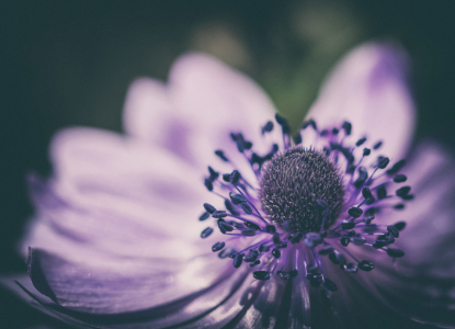 Picture no: 11756268 Anemone Created by: steffen-hdf