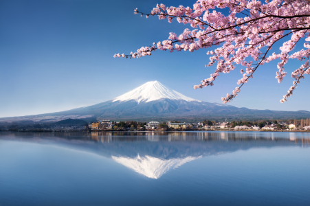 Picture no: 11756576 Fuji in Japan zur Kirschblüte  Created by: eyetronic