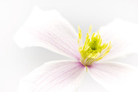 Picture no: 11759334 CLEMATIS 3 Created by: DenisFeiner