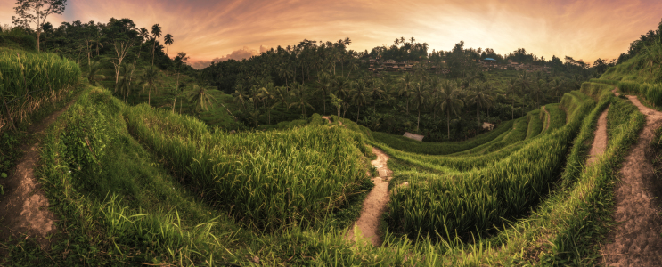 Picture no: 11759636 Bali - Ubud Tegalalan Panorama Created by: Jean Claude Castor