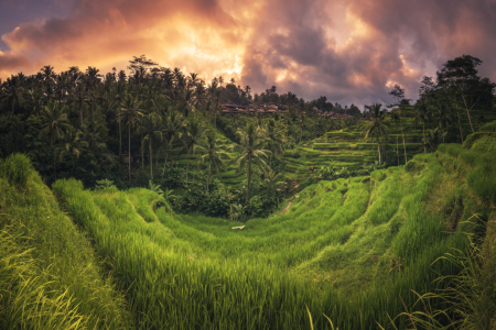 Picture no: 11759646 Bali - Ubud Tegalalan Panorama Created by: Jean Claude Castor